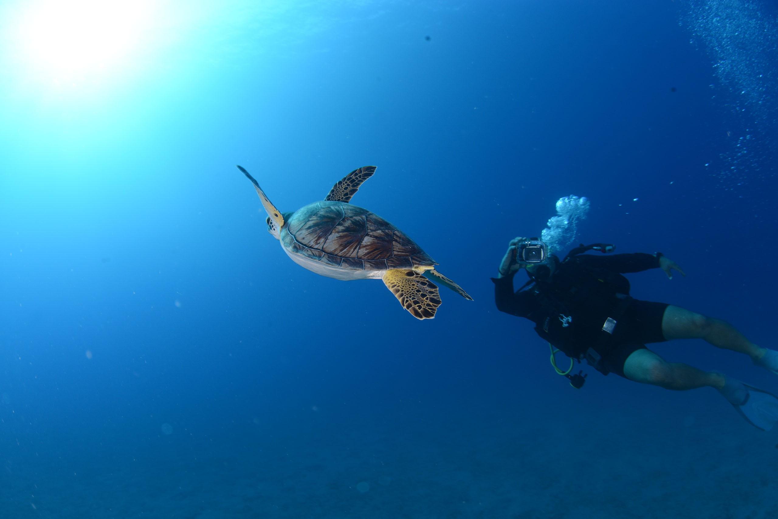 Dalış Tutkunlarının Antalya'da Mutlaka Görmesi Gereken 7 Dalış Noktası