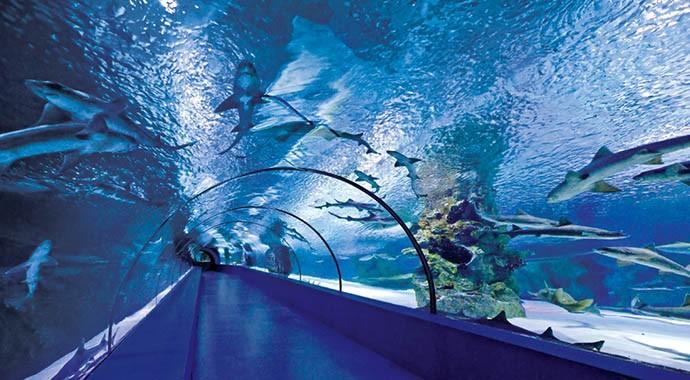 Antalya'da Eğlence Dolu Bir Dünya: Aquarium